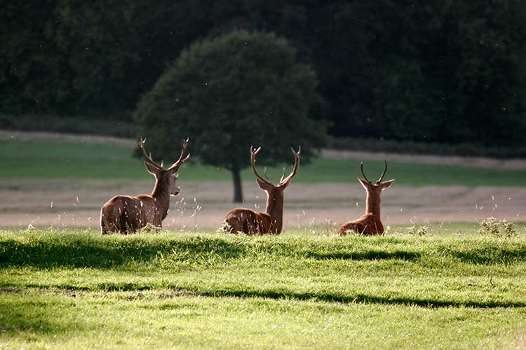 Richmond-Park